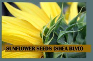 Sunflower Seeds (Shea Blvd)